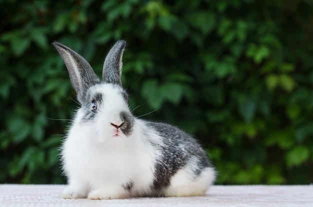 Süßes kleines flauschiges kaninchen. hase ist ostersymbol.