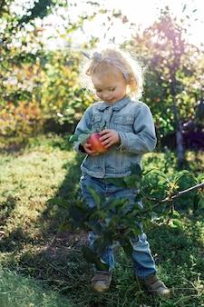 Süßes kleines mädchen, das reife organische rote äpfel im apfelgarten im herbst gesundes essen pflückt