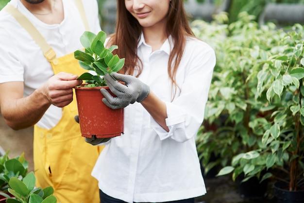 Süßes lächeln. ein paar nette gartenarbeiter in arbeitskleidung, die sich um die pflanze im topf im gewächshaus kümmern.