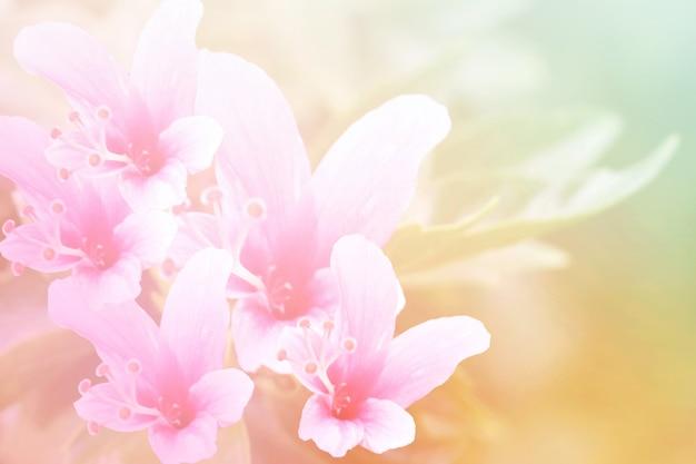 Süßes und pastellfarbblumen-, weiches und undeutliches fokusfoto in der weinleseart