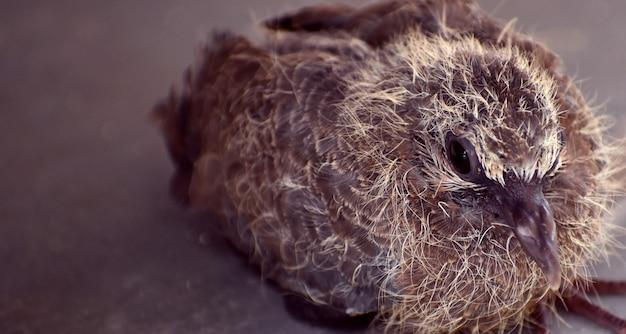 Süßes vogelbaby, das auf dem boden sitzt