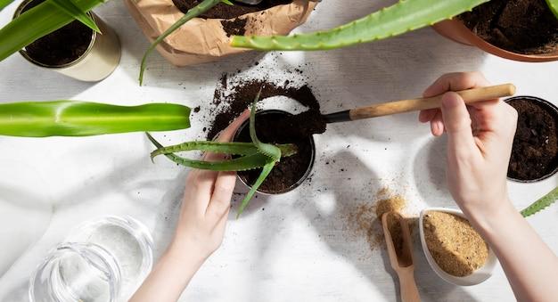 Sukkulente für den hausgarten pflanzen. wiederverwendung von zinn zum anbau von pflanzen. null abfall, recycling, wiederverwendung, upcycling. draufsicht