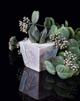 Sukkulente pflanze im lila keramikblumentopf isoliert auf schwarzem acryl