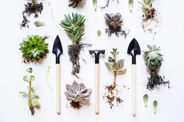 Sukkulente pflanzen