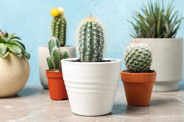 Sukkulenten auf grauem tisch. zimmerpflanzen
