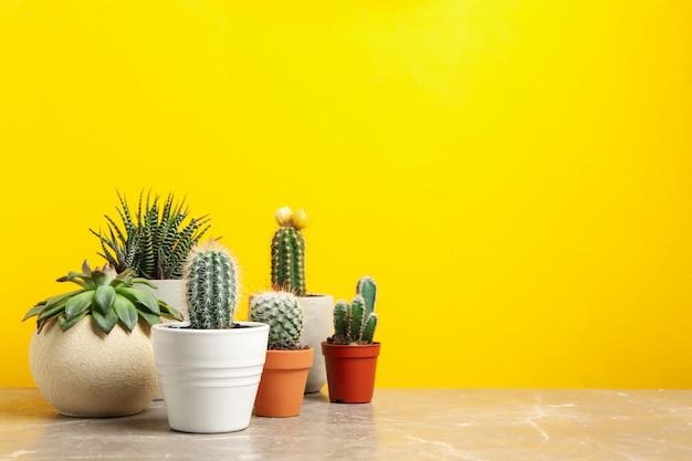 Sukkulenten in töpfen gegen gelbe oberfläche. zimmerpflanzen