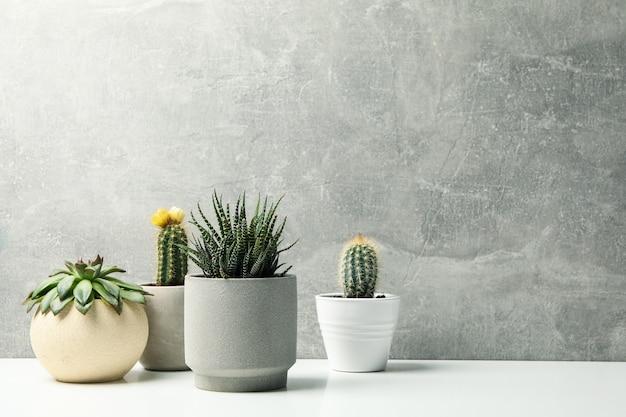 Sukkulenten in töpfen gegen graue oberfläche. zimmerpflanzen