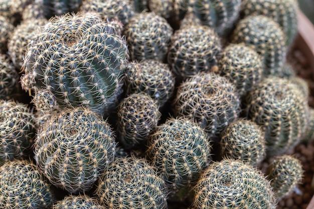 Sukkulenten oder kakteen im botanischen wüstengarten