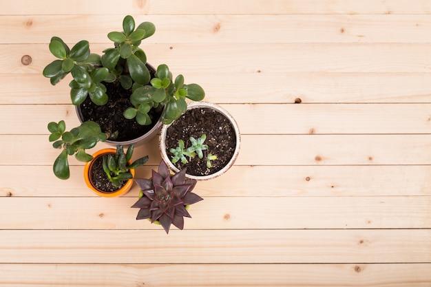 Sukkulenten, zimmerpflanzen in töpfen