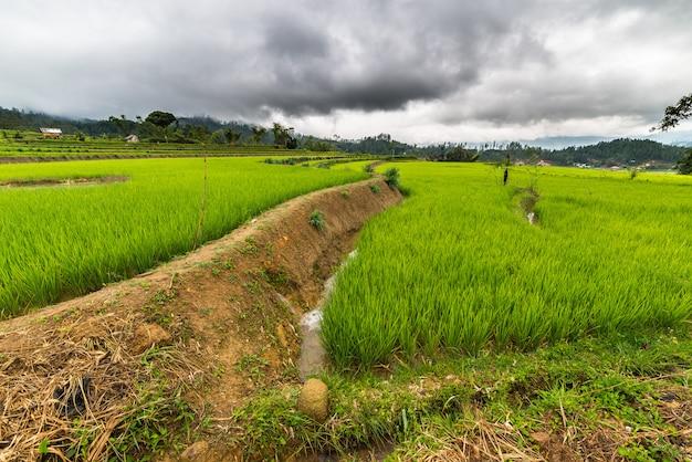 Sulawesi reisfelder