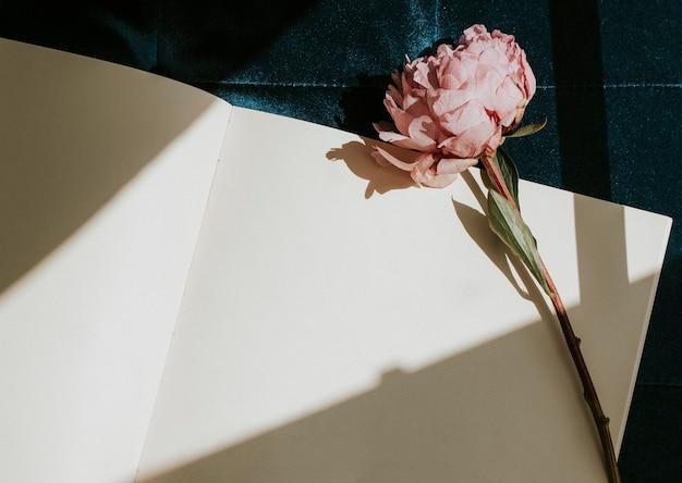 Summer vibes roman und eine kernlachsblume