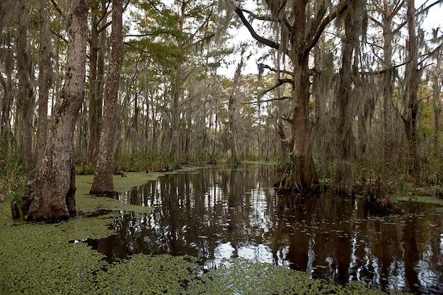 Sumpf nahe new orleans, louisiana