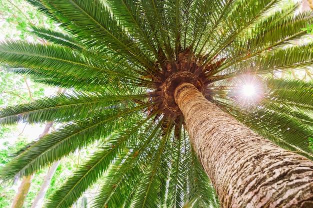 Sun-aufflackern auf tropischer dattelpalme