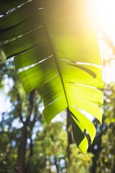 Sun-beleuchtung obwohl pflanzenblatt