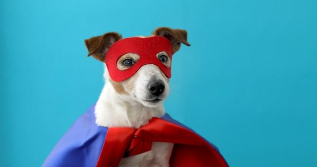 Superheld-kostüm von dog jack russell