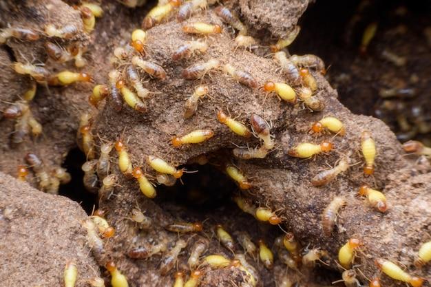 Supermakrobild der horde der termiten, die ihr nest errichten