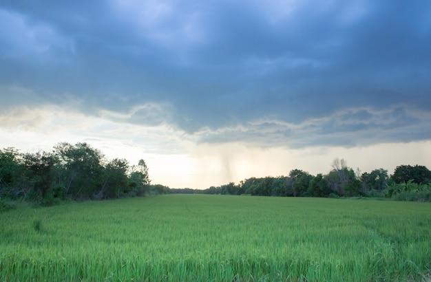 Supersturm dunkelheit und wolken am abend, bevor es über das reisfeld regnet.