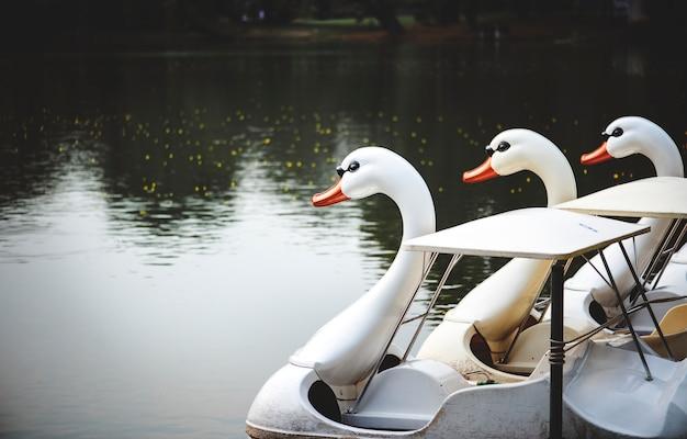 Swan paddelboote in einem see