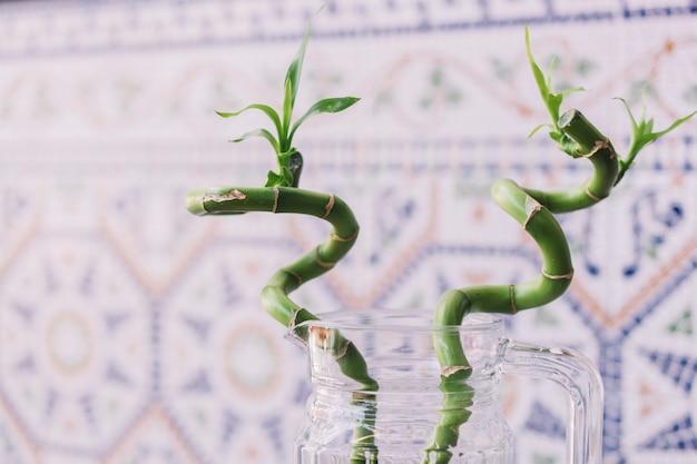 Swirly bambus pflanze