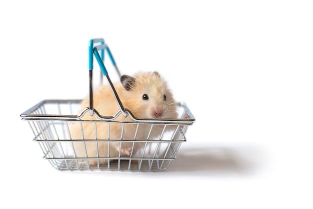 Syrischer hamster, der im mini-einkaufskorb auf weißem hintergrund sitzt