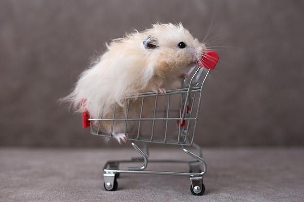Syrischer hamster im einkaufswagen auf dem braunen hintergrund