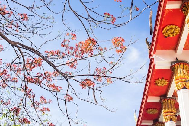 Szene des reisetempelbuddhismus in thailand