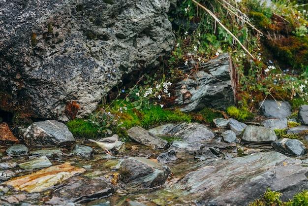 Szenisch mit klarem quellwasserstrom zwischen dichtem moos und üppiger vegetation auf steinen. gebirgsbach auf moosigen felsen mit frischem grün. bunte kulisse mit reicher alpenflora.