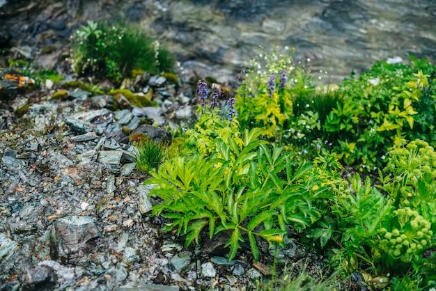 Szenisch mit klarem quellwasserstrom zwischen dichtem moos und üppiger vegetation. gebirgsbach am moosigen hang mit frischem grün und vielen kleinen blumen. bunter hintergrund der reichen alpinen flora.