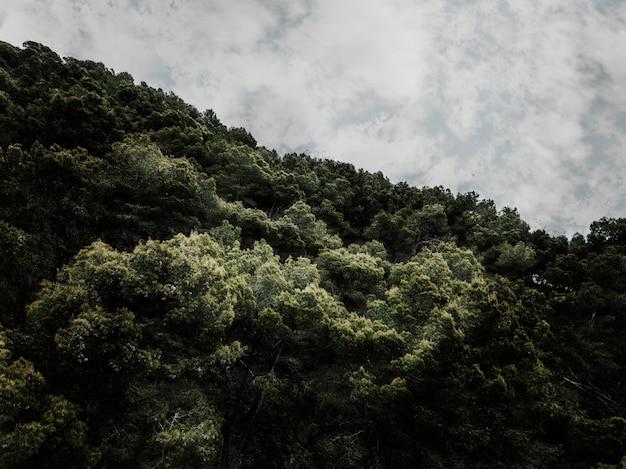 Szenische ansicht der bäume gegen bewölkten himmel