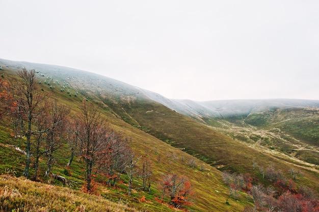 Szenische ansicht der schneebedeckten gebirgsspitzenbedeckung des gebirgsherbstes rote und orange wälder durch nebel an den karpatenbergen auf ukraine, europa.