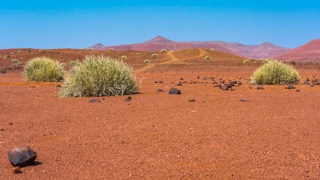 Szenische ansicht des palmwag-konzessionsgebiets mit milchbüschen in namibia in afrika.