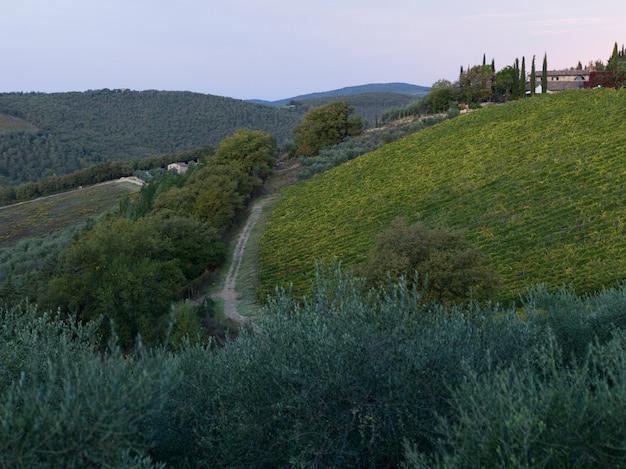 Szenische ansicht des weinbergs mit dorf im hintergrund, toskana, italien