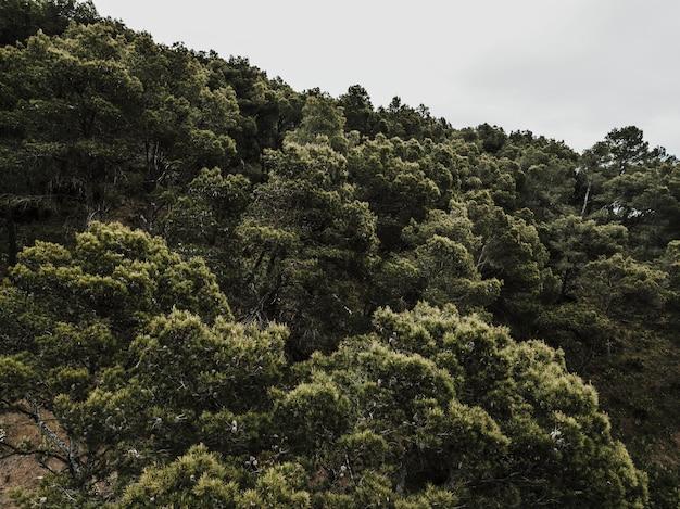 Szenische ansicht von den bäumen, die im wald wachsen
