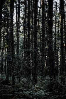 Szenische ansicht von den hohen tropischen bäumen, die im wald wachsen
