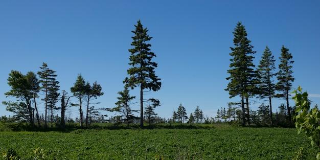 Szenische ansicht von grünen bäumen auf feld, albanien, prinz edward island, kanada