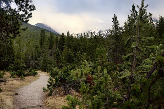 Szenische ansichten des schweizer nationalparks am frühlingstag.