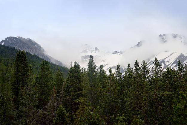 Szenische ansichten des schweizer nationalparks mit einer straße am sonnigen frühlingstag.