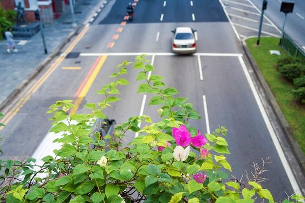 Szenische blumen des blühenden busches über der berühmten hügelstraße in singapur; fokus auf blumen