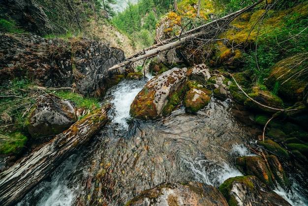 Szenische landschaft zu wilder schöner flora auf kleinem fluss in wäldern am berghang. moosige umgestürzte baumstämme und felsbrocken mit moosen in klarem quellwasser. waldlandschaft zu kaskaden im gebirgsbach.