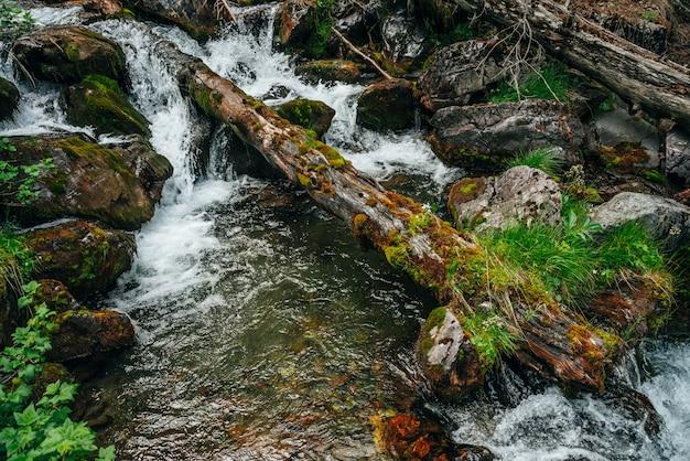 Szenische landschaft zu wilder schöner flora auf kleinem fluss in wäldern am berghang. moosiger umgestürzter baumstamm und felsbrocken mit moosen im klaren quellwasser. waldlandschaft zu kaskaden im gebirgsbach.