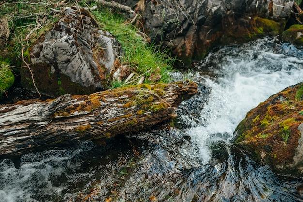 Szenische natur mit schönem moosigen umgestürzten baumstamm zwischen großen felsblöcken mit moosen im klaren quellwasser der bergbachnahaufnahme. natürlicher hintergrund mit transparentem wasser im kleinen fluss.