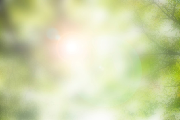 Szenische sonne lens flare, die durch bäume naturfotografie scheint