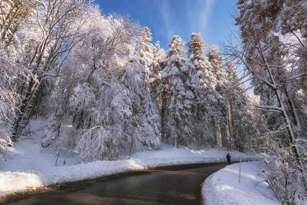 Szenische tiefwinkelaufnahme eines waldes während der wintersaison