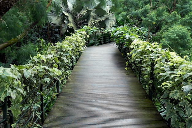 Szenischer holzweg im botanischen garten von singapur