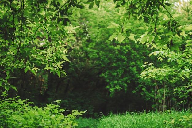 Szenischer natürlicher grüner hintergrund in unschärfe hinter lebendigen dickichten im sonnenlicht.