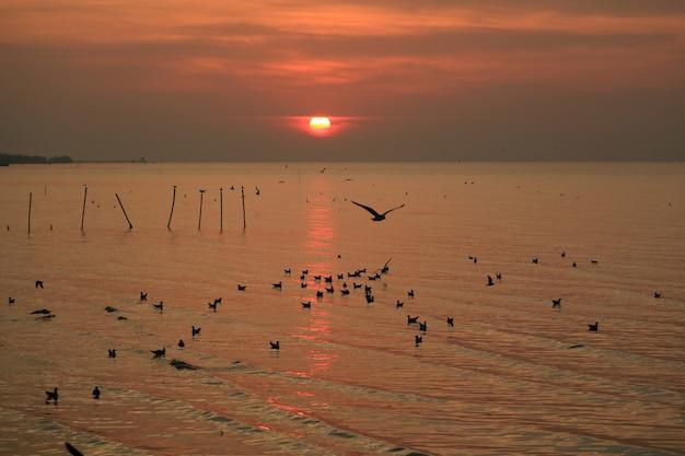 Szenischer sonnenaufgang über dem ruhigen meer des golfs von thailand mit zahlreichen sich hin- und herbewegenden seemöwen