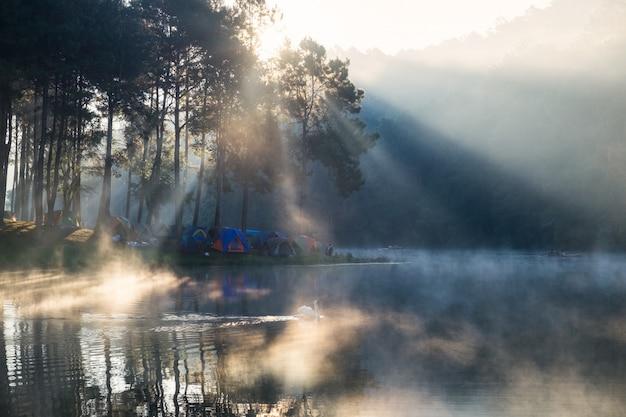 Szenisches kiefernwaldsonnenlicht glänzen auf nebelreservoir am morgen am stechenden oung