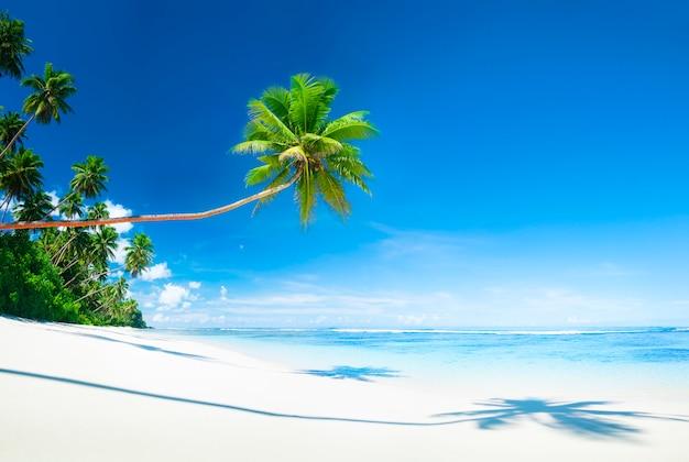 Szenisches weißes sand-strand-sommer-baum-konzept
