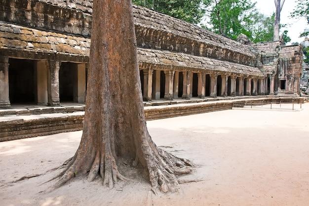 Ta prohm tempel, angkor wat, siem reap, kambodscha