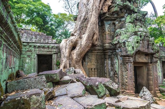 Ta prohm tempel in angkor wat